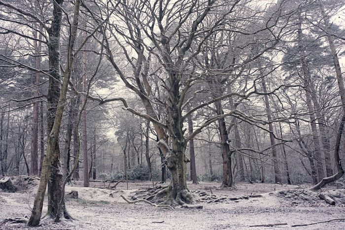 Snow in woods in Ashdown Forest