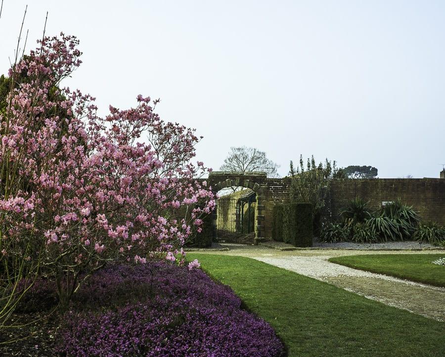Rhododendron in Wakehurst garden