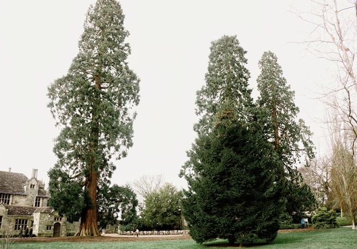 Wakehurst Manor and Redwoods