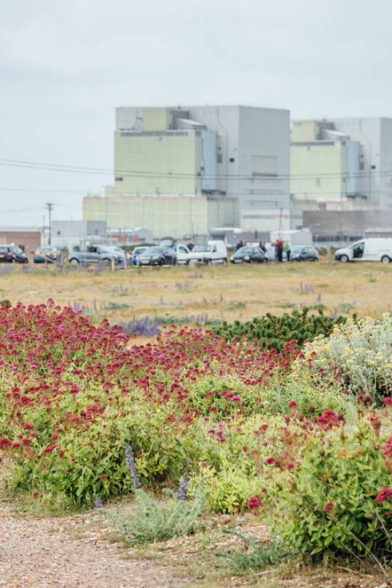 Dungeness flowers and nuclear power stations