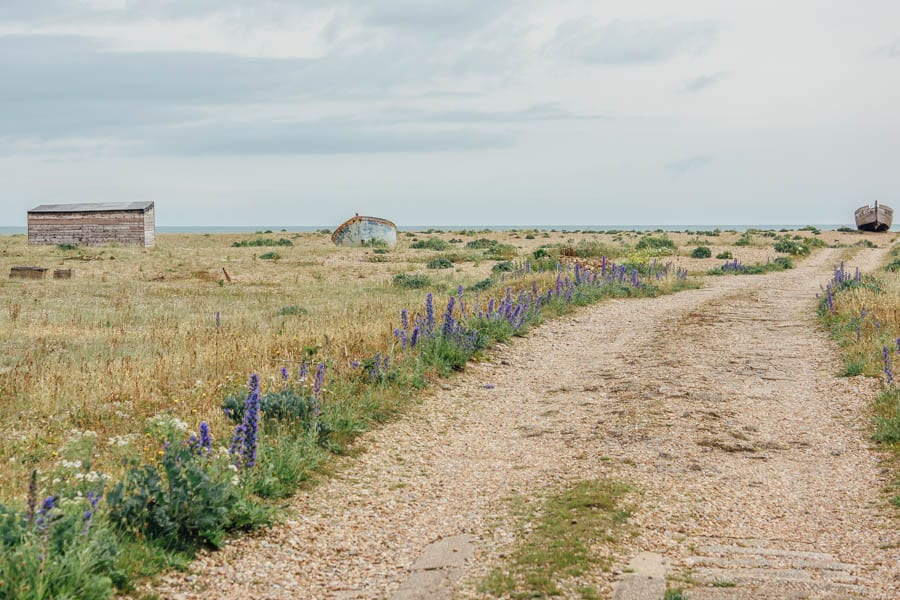 Dungeness flowers and track to beach
