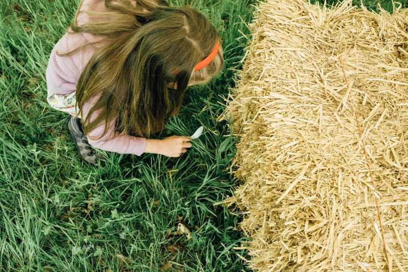 Childrens bug hunt to identify woodland insects