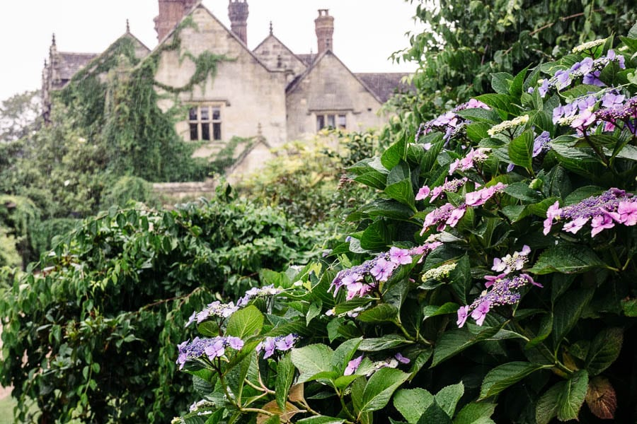 Hydrangeas and Gravetye Manor Hotel in the rain