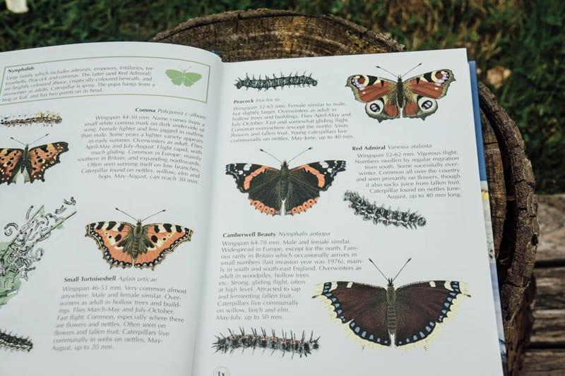 Identifying butterflies book