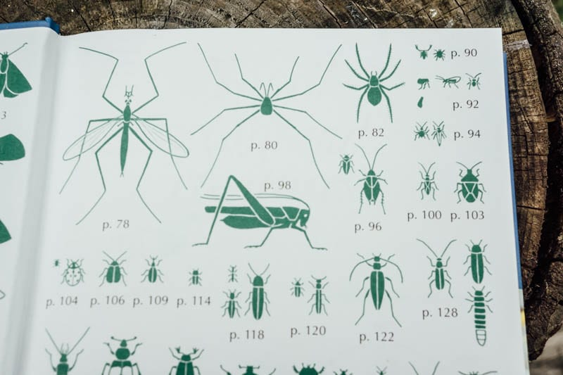 Small Woodland Creatures spiders