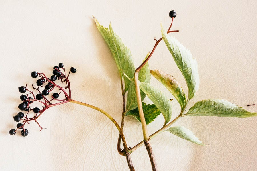 Elder berries on white plate