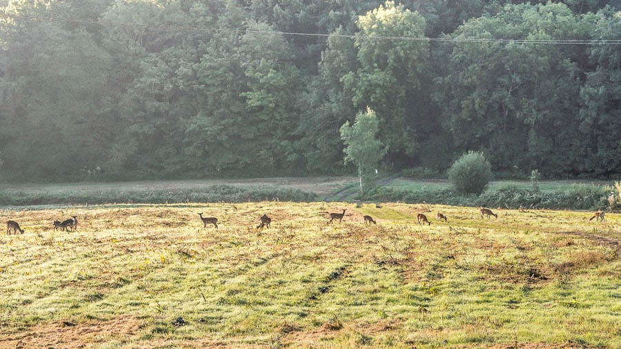 Herd of deer in valley in Sussex