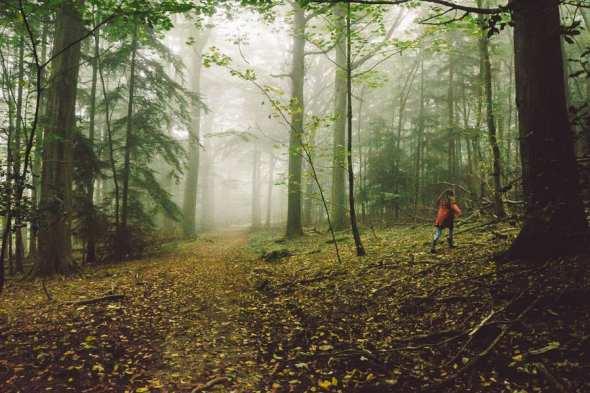 Luce running in misty woods
