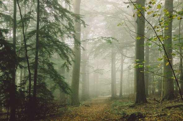 Path in misty woods
