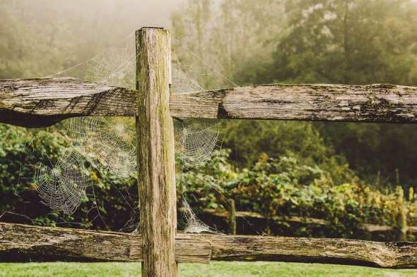 Spider webs on fence