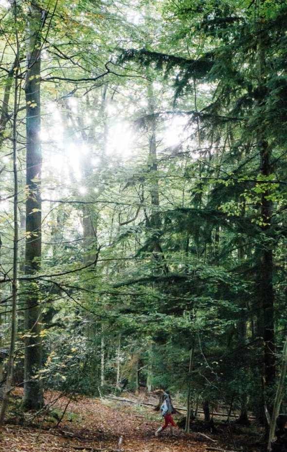 Sword fight in woods