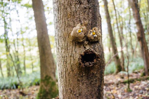 Tree faces with daisy eyes