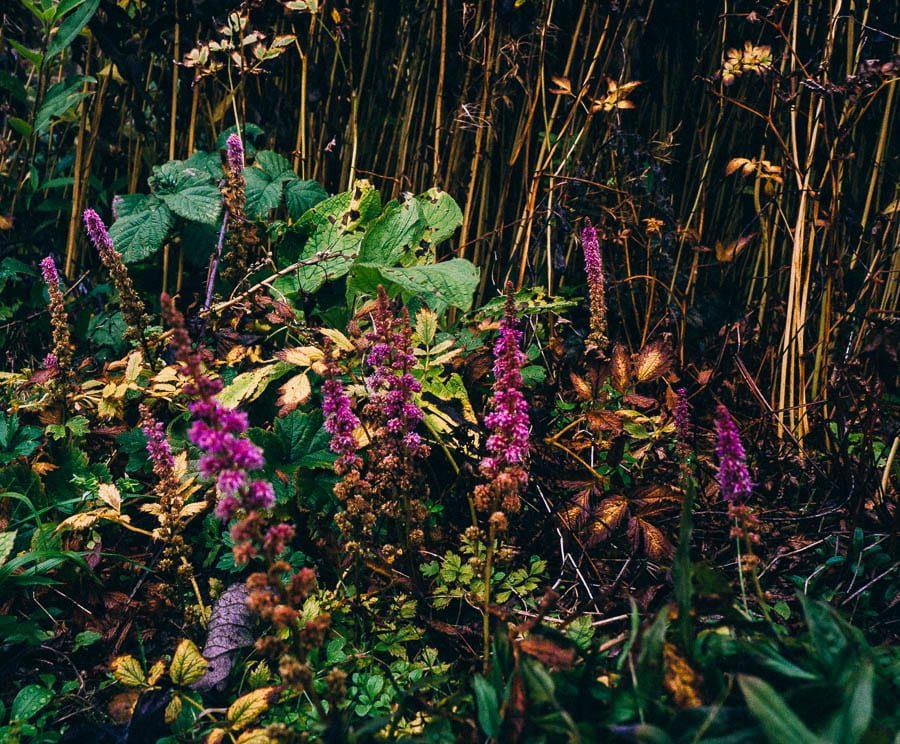 November Garden wild flowers