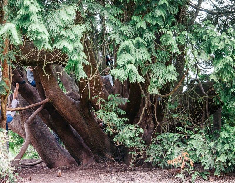 Let them climb trees Sheffield Park