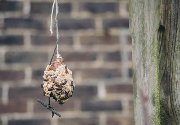 Winter Bird Feeding cone feeder in garden