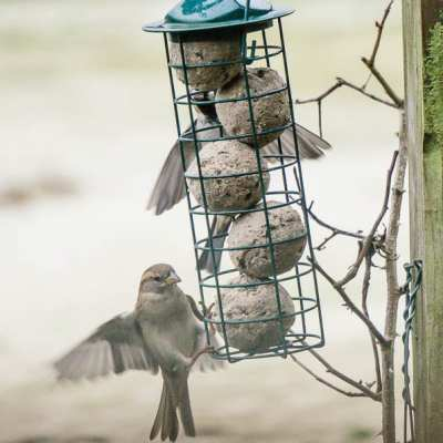 Winter Bird Feeding