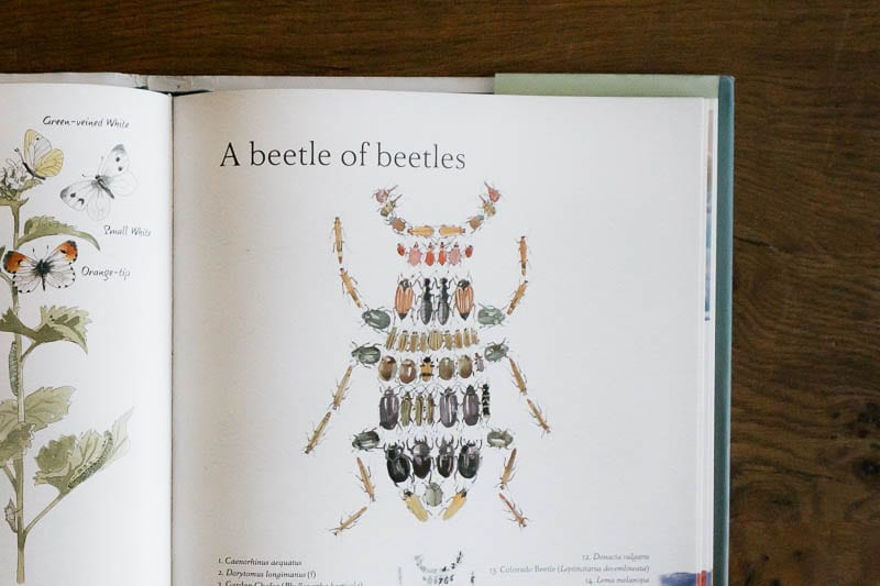 An Illustrated Country Year Illustration beetles