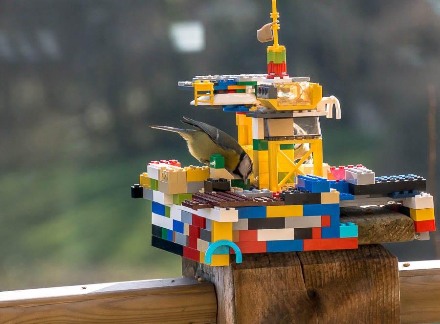 Kids bird watching bird with lego feeder