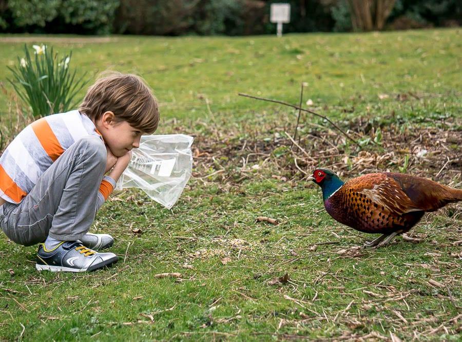 Kids bird watching pheasant