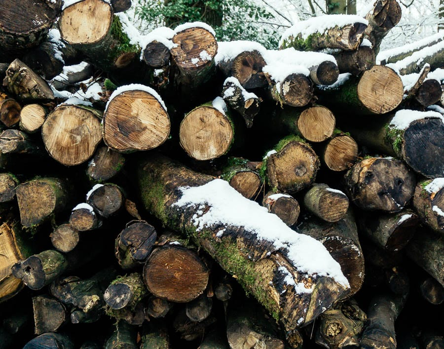 Snow Woods log pile