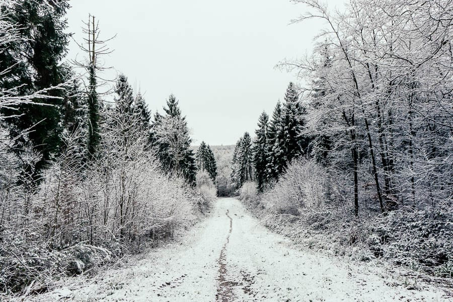 Snow Woods path