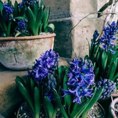 Late afternoon stroll in Gravetye's garden