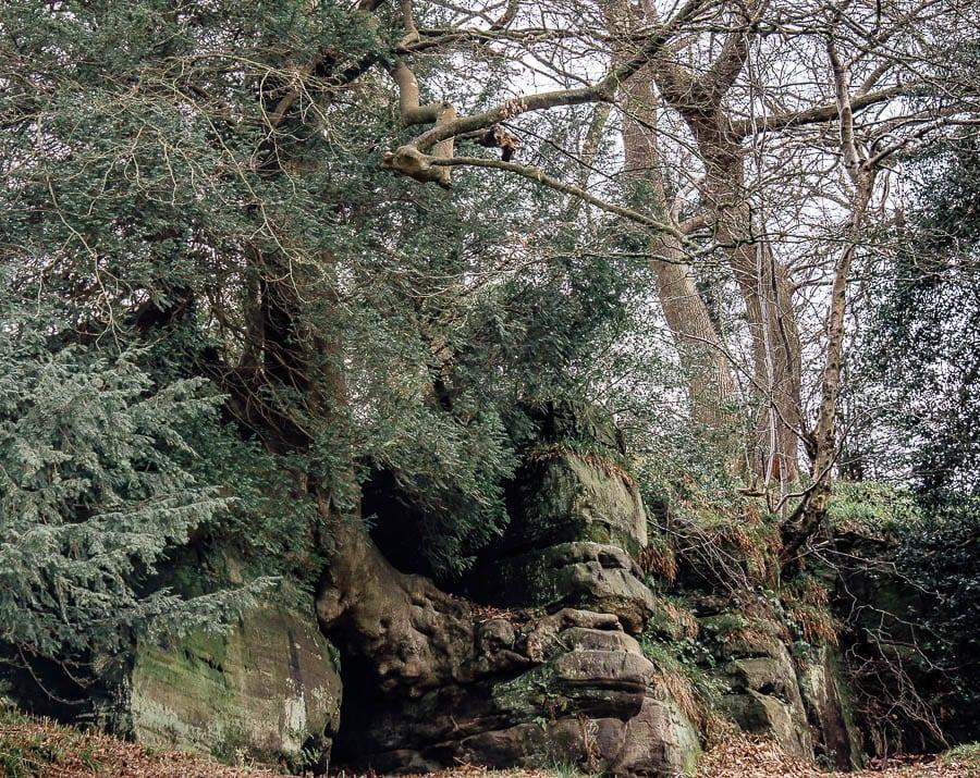 Wakehurst Rock Walk sandstone cliff and tree roots