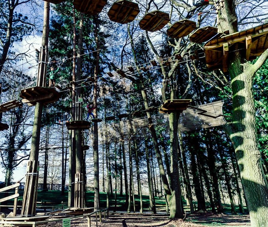 Treetop adventure Go Ape for Juniors