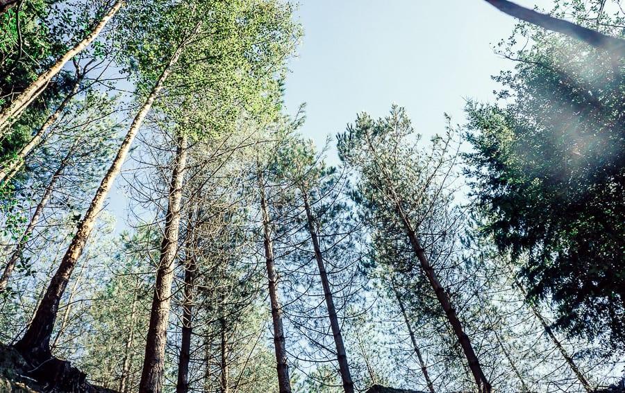 Treetop canopy