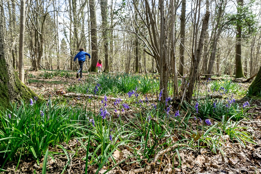 Bluebells and kids in woods