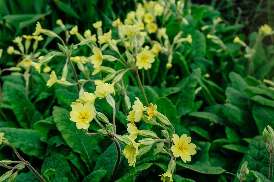 Charleston garden flowers