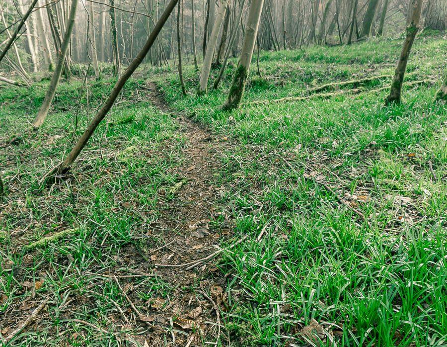 Follow badger path woods