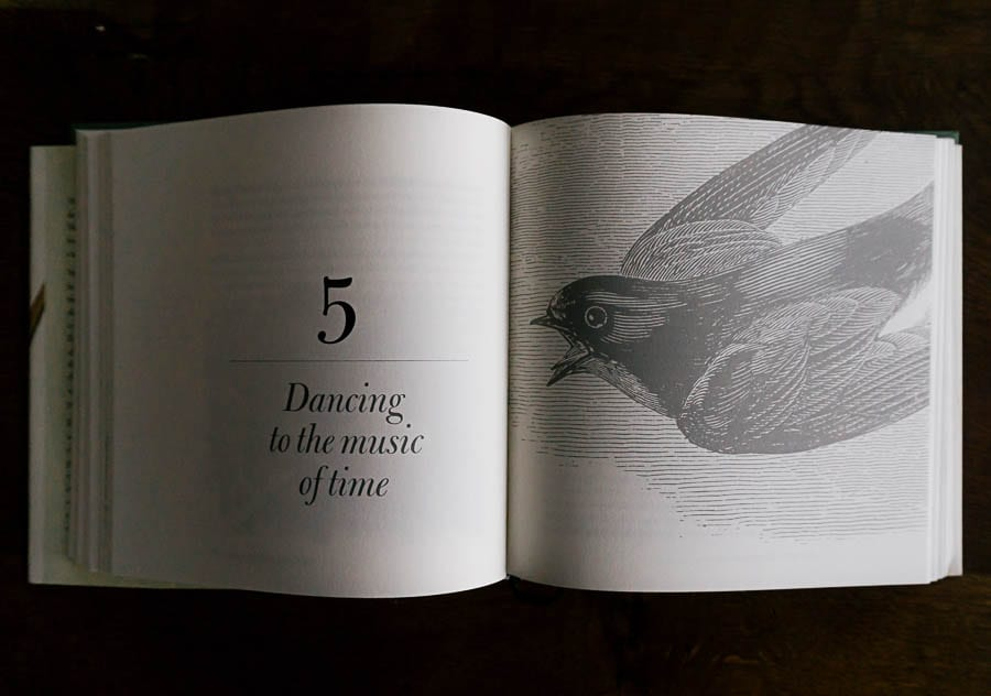 The Meaning of Birds chapter by Simon Barnes book