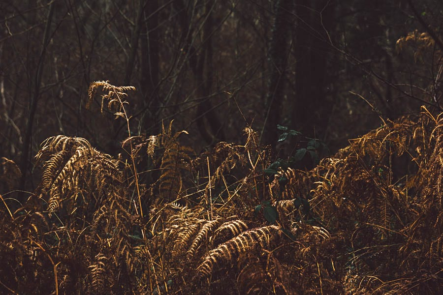 Wild flower path dead copper fern
