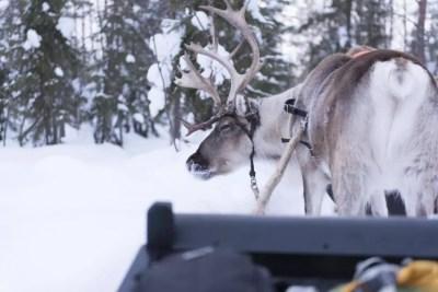 Rudolf...