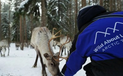 8 February 2020: Peaceful visit to the reindeer farm