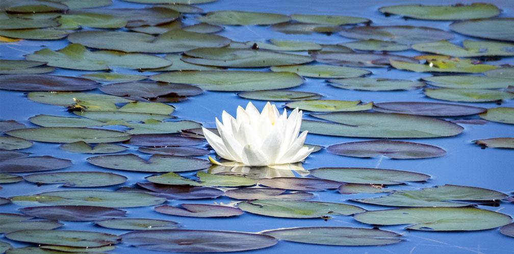 adirondack wildflowers white water
