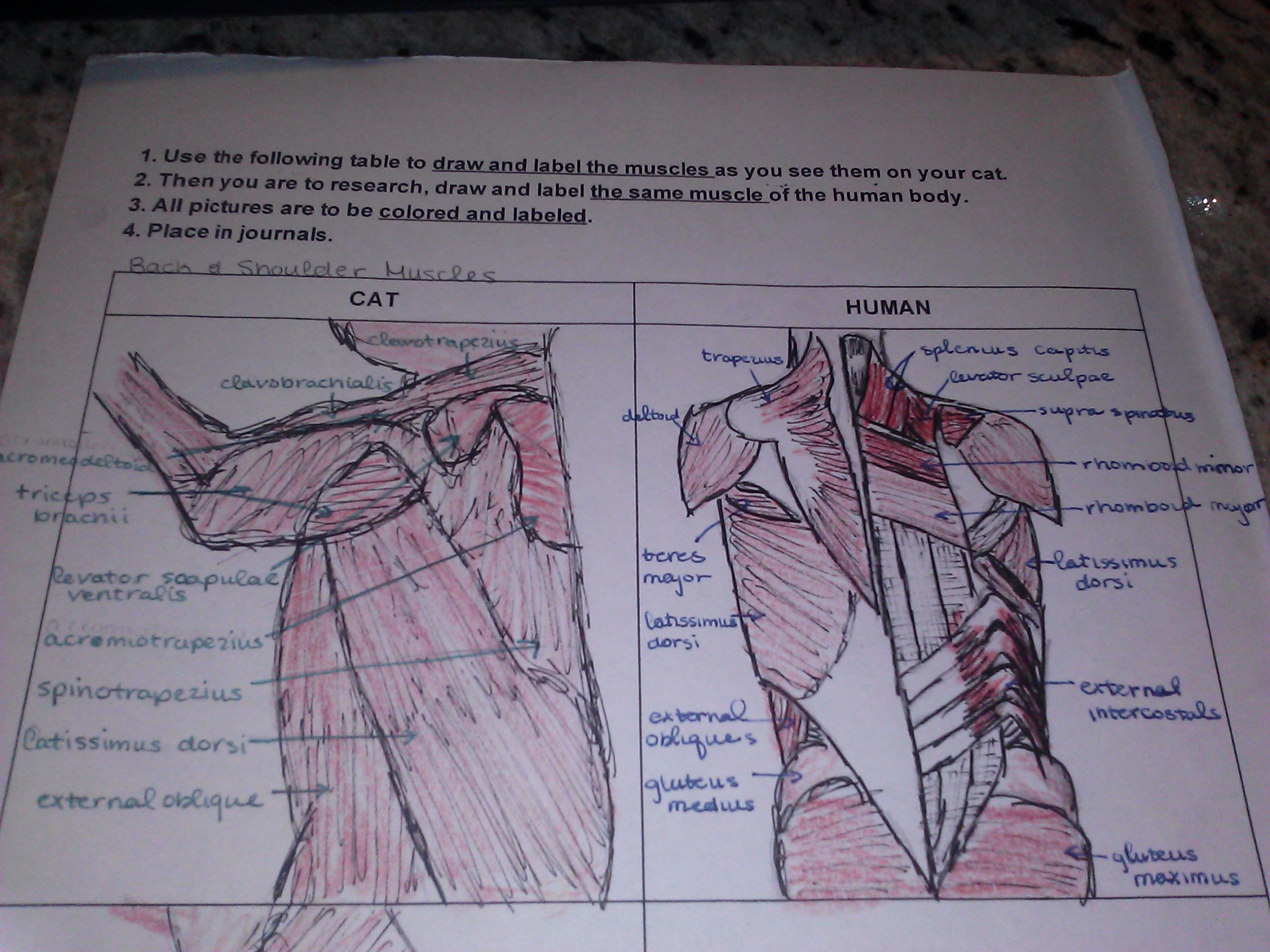 Muscles Day 3 Amp 4 Arm And Forearm Back And Shoulder