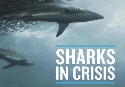 threats to sharks shift