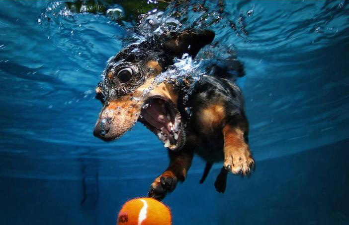 under-water-dogs-dive-funny-wildammo (3)