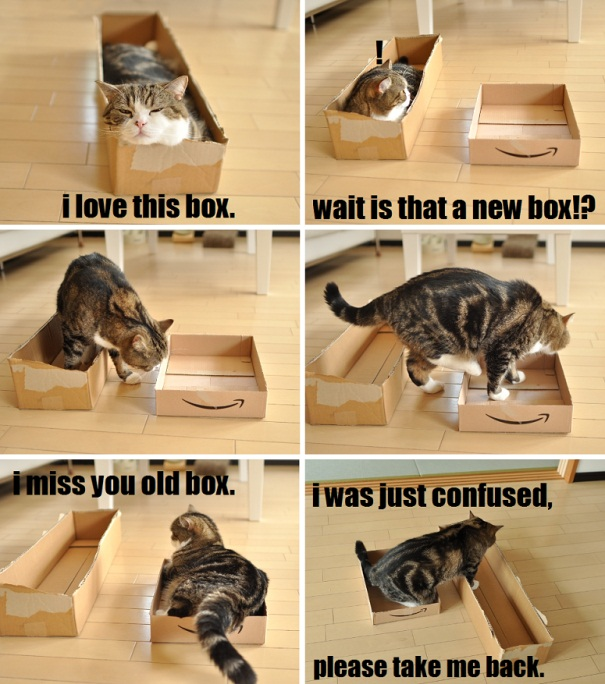 Examples Of Cat Logic We Humans May Never Understand (17)