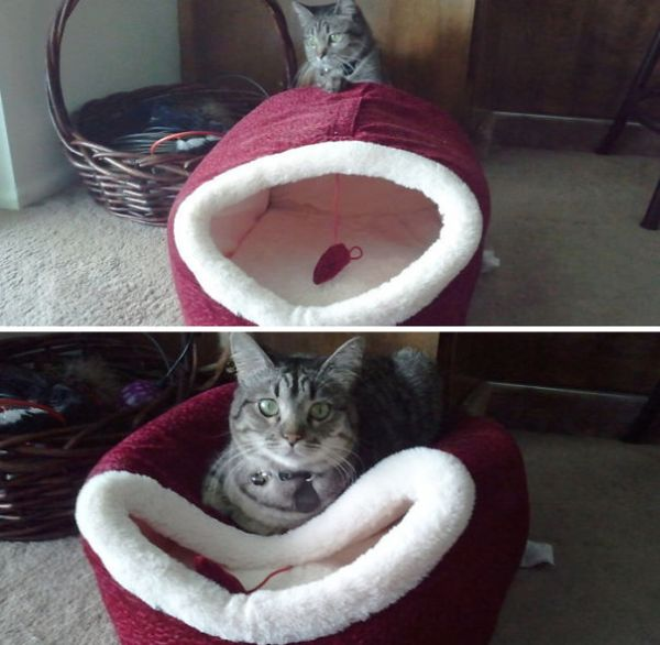 Examples Of Cat Logic We Humans May Never Understand (4)