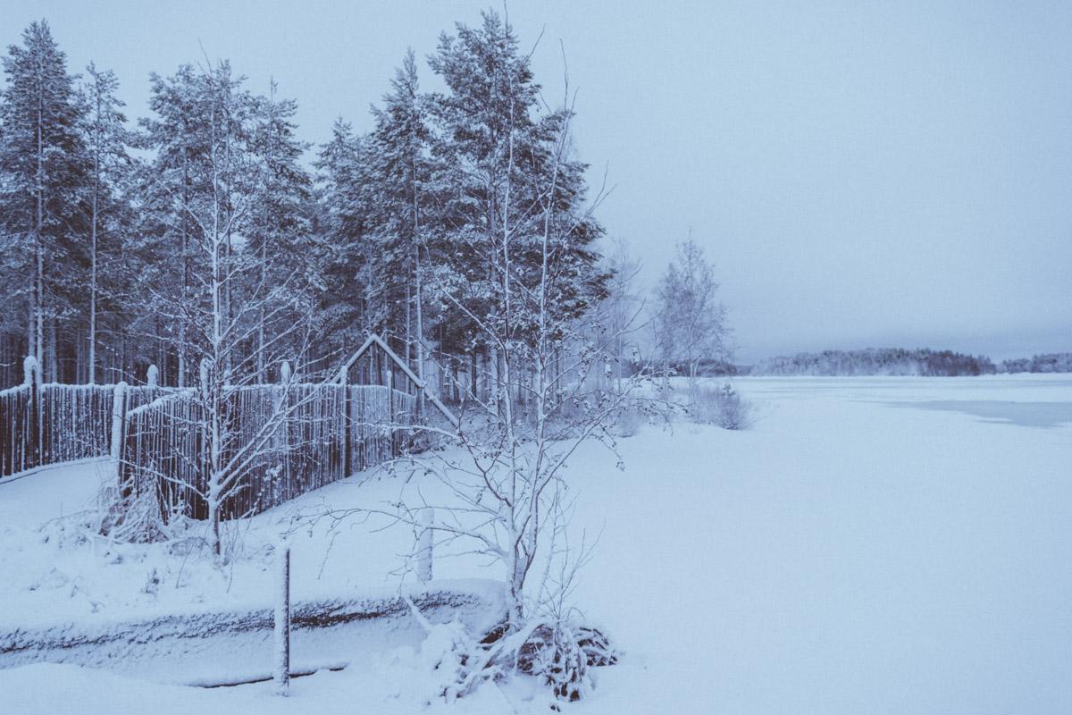 Beautiful tree in Winter landscape