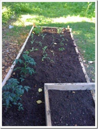 bennett's garden