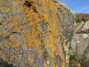 Scotland colours...yellow on rock