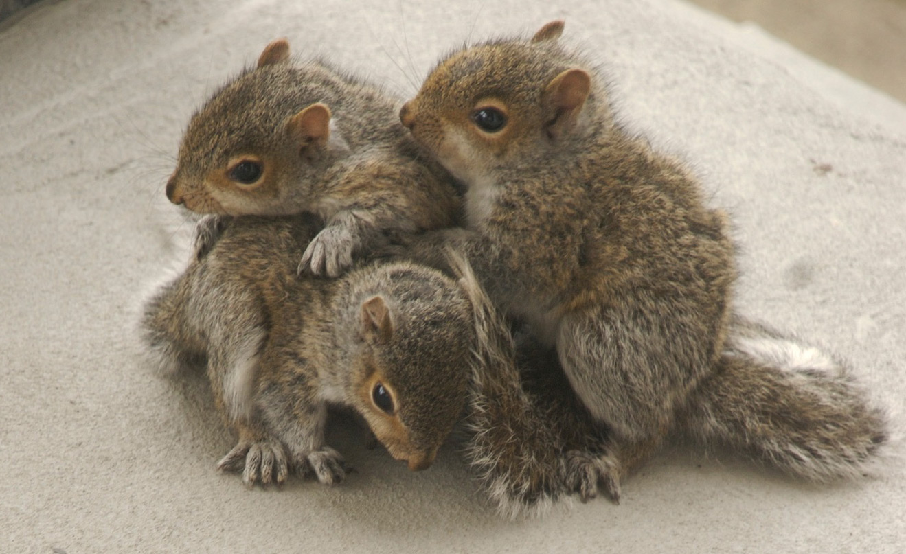 3 young squirrels