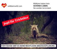 Abschussplan Fuchs