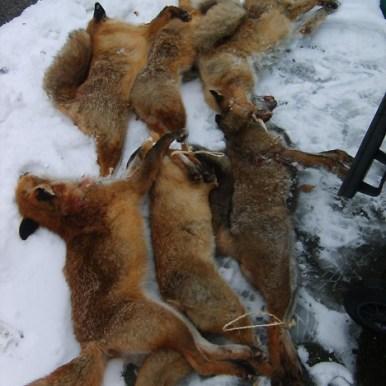 fox52