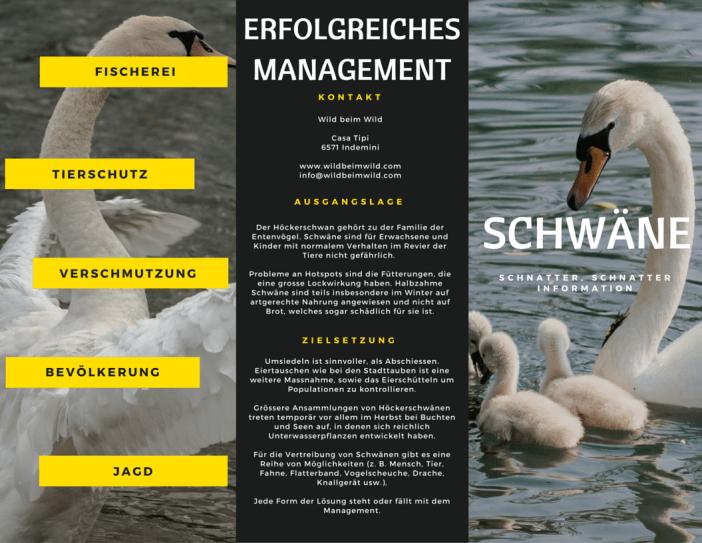 Erfolgreiches Schwäne-Management