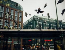 Stadttauben Broschüre Wild beim Wild